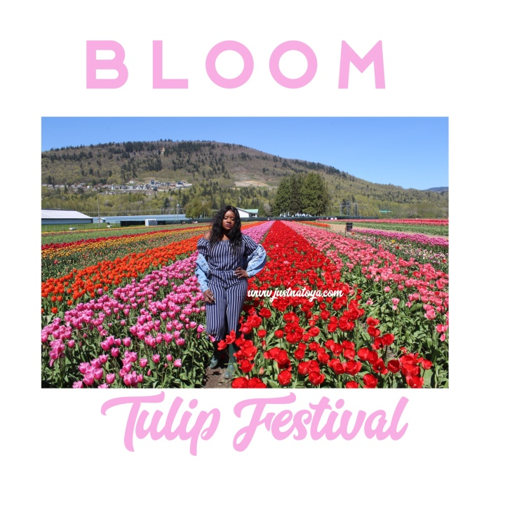 Adventure: Bloom Tulip Festival