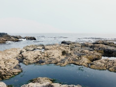 Ucluelet, tourism ucluelet, tourism tofino, wild pacific trail, ocean, beach, pacific ocean,