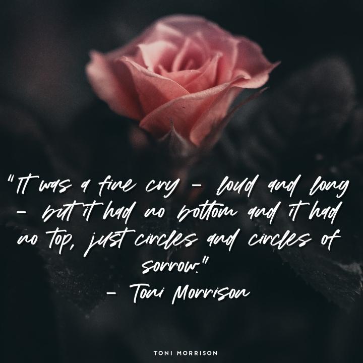 Toni morrison, quotes, Toni morrison quotes, positive quotes, uplifting quotes,photography, art quotes, novelist, just antoya, studio natoyaista, natoyaista, natoya ellis, rose, roses